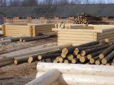 Строительная площадка по изготовлению срубов бань